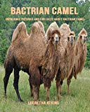 Bactrian camel: Incredible Pictures and Fun Facts about Bactrian camel