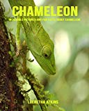 Chameleon: Incredible Pictures and Fun Facts about Chameleon