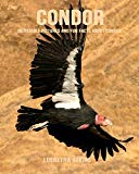 Condor: Incredible Pictures and Fun Facts about Condor