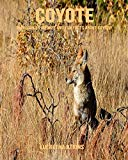 Coyote: Incredible Pictures and Fun Facts about Coyote