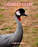 Crowned Crane: Incredible Pictures and Fun Facts about Crowned Crane