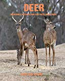 Deer: Incredible Pictures and Fun Facts about Deer