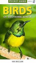 Birds of Southern Africa Pocket Guide (Pocket Guide Series)