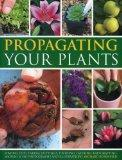 Propagating Your Plants