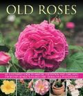 Old Roses : An Illustrated Guide to Varieties, Cultivation and Care, with Step-By-Step Instr...