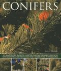 Conifers : An Illustrated Guide to Varieties, Cultivation and Care, with Step-by-Step Instru...
