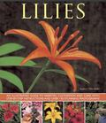 Lilies : An Illustrated Guide to Varieties, Cultivation and Care