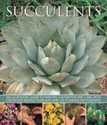 Succulents : An Illustrated Guide to Varieties, Cultivation and Care, with Step-By-step Inst...