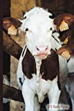 2019 Weekly Planner:: 2019 Weekly Planner Dairy Cows Cattle Ranch: Datebook Weekly Monthly H...