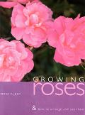 Growing Roses and How to Use and Arrange Them