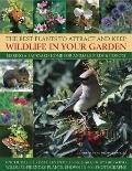 Best Plants to Attract and Keep Wildlife in Your Garden