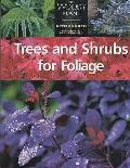Trees and Shrubs for Foliage - Glyn Church - Paperback