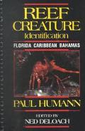 Reef Creature Identification Florida, Caribbean, Bahamas