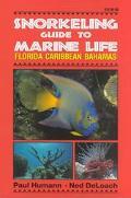 Snorkeling Guide to Marine Life Florida Caribbean Bahamas