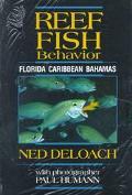 Reef Fish Behavior Florida Caribbean Bahamas