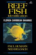Reef Fish Identification : Florida, Caribbean, Bahamas