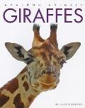 Giraffes (Amazing Animals)