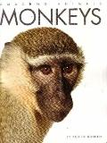 Monkeys (Amazing Animals)