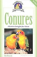 Conures A Guide to Caring for Your Conure