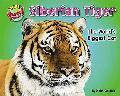Siberian Tiger: The World's Biggest Cat (Supersized!)