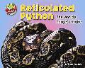 Reticulated Python: The World's Longest Snake (Supersized!)