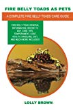 Fire Belly Toads as Pets: Fire Belly Toad general information, where to buy, care tips, temp...
