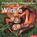 Wildlife The World's Top Photographers and the stories behind their greatest images