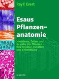 Esaus Pflanzenanatomie : Meristeme, Zellen und Gewebe der Pflanzen - ihre Struktur, Funktion...
