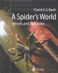 Spider's World Senses and Behavior