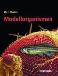 Modellorganismen